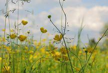 fields, open spaces