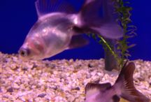 Aquatics / All things fishy and aquatic from our Pet store Not Just Pets
