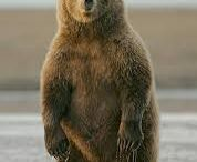 Ours / bears