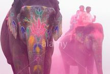 India / by Alamy