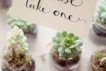 Succulants / Wedding Day Succulent Inspiration
