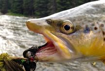 Trout Pictures