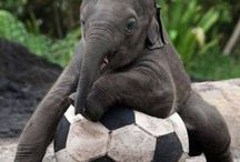 Baby elephants / Cute little baby elephants