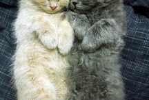 Kitties and Other Cute Critters