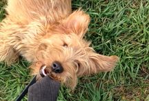 Dogs & Joy / It is about my dog (Rusty) and other dogs who help us to live in the moment and enjoy our life everyday.