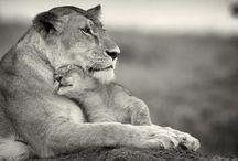amor salvaje