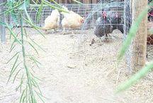 Farming Ideas / by Tammy Jost