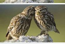 That's a Hoot / Owls  / by Kendall Garstka