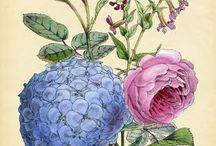 hortensia painting