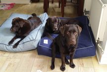 Bespoke Made to Measure Dog Beds