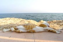 Ten Insanely Cute Cats on Holiday!