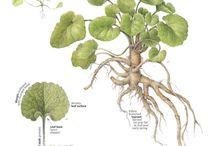 Zioła i roślinny