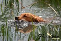 Pet Photography - On Location / Paws in Motion Photography specializes in canine action & sporting events, seniors, engagements, families, lifestyle and sessions with terminally ill pets.  We are located in Colorado.