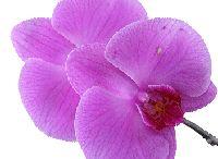 Kvety pestovanie