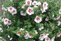 Biblical flowers