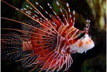 Život v korálovém útesu