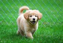 Cute puppys