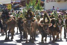 Festivals that celebrate animals
