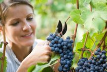 Wine Jobs / Looking for Jobs in the Wine Industry?  Go to: http://wineryads.com/wine-jobs/
