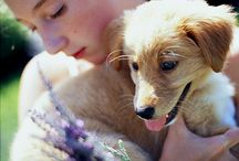 pets and gardens / making the garden safe and welcoming for our companion animals