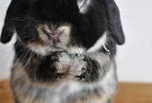 bunny  - nyuszi