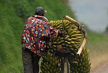 POSTCARD FROM: KENYA