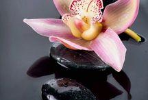 Orgideë/Orchid