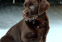 Pets / by Jane Hanle
