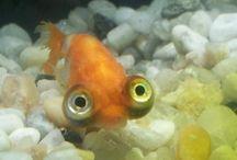 Awsome Animals/Fish!