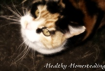Photography / by Mona @ Healthy Homesteading