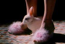 Bunny girl aes.