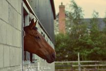Photography of Horses in Dublin / Irish people are very fond of horses. This is my first photo shoot is with the horse named Joe on his 15 birthday on 29 June 2016. He lives since 9 years ago at the Sallows Wood Stables in Kilsallaghan, Dublin where the owner Roisin takes very good care of him.