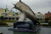 Salty Dog Fishing Charters / Fishing in Orange Beach, AL