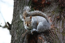Squirrel Appreciation Day / January 21st