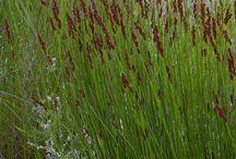 Plants SA no water