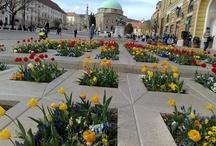 Városlátogatás Mo. / Szép magyar városok, ahová el szeretnék menni vagy már voltam