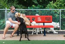 Bark, Bark! Dog Park Ideas / Enjoy the great outdoors and keep your pup active and healthy. These ideas will surely inspire your next dog park design.