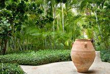 Avalon Garden Ideas