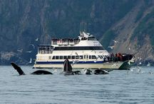 Whales! / These magnificent mammals can be seen on Major Marine Tours cruises into Kenai Fjords National Park and Prince William Sound.