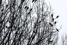 Raben und Baum