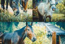 фотосессии с животными / В студии Маска любят фотографировать животных. Мы считаем, что очень здорово, когда семья приходит на фотосессию и не забывает взять с собой четвероного друга.