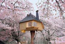 Japan / by Krishna Detroja