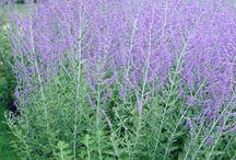 Planting Design  / Planting Design