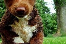 Pets and Wild animals;