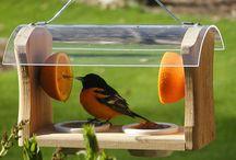 Jardim para pássaros