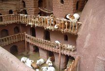 Guinea pigs :)