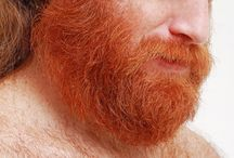 red gold leon ginger bear