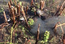 Wildlife around our Natural Pool