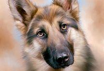 cane e lupo e gatto