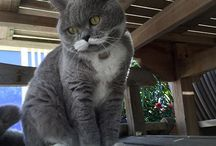 Citronnelle, The Lady Cat with a Mustache